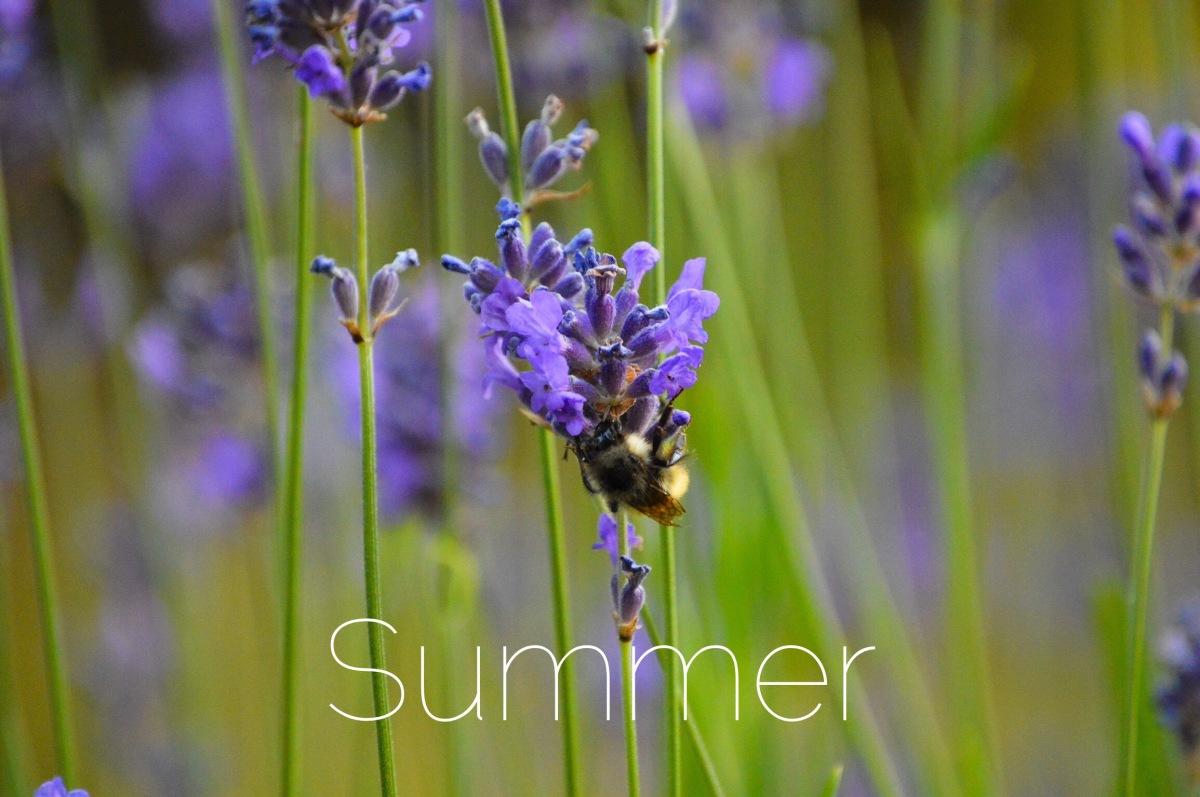 Montessori Summer activities to keep the learningfresh