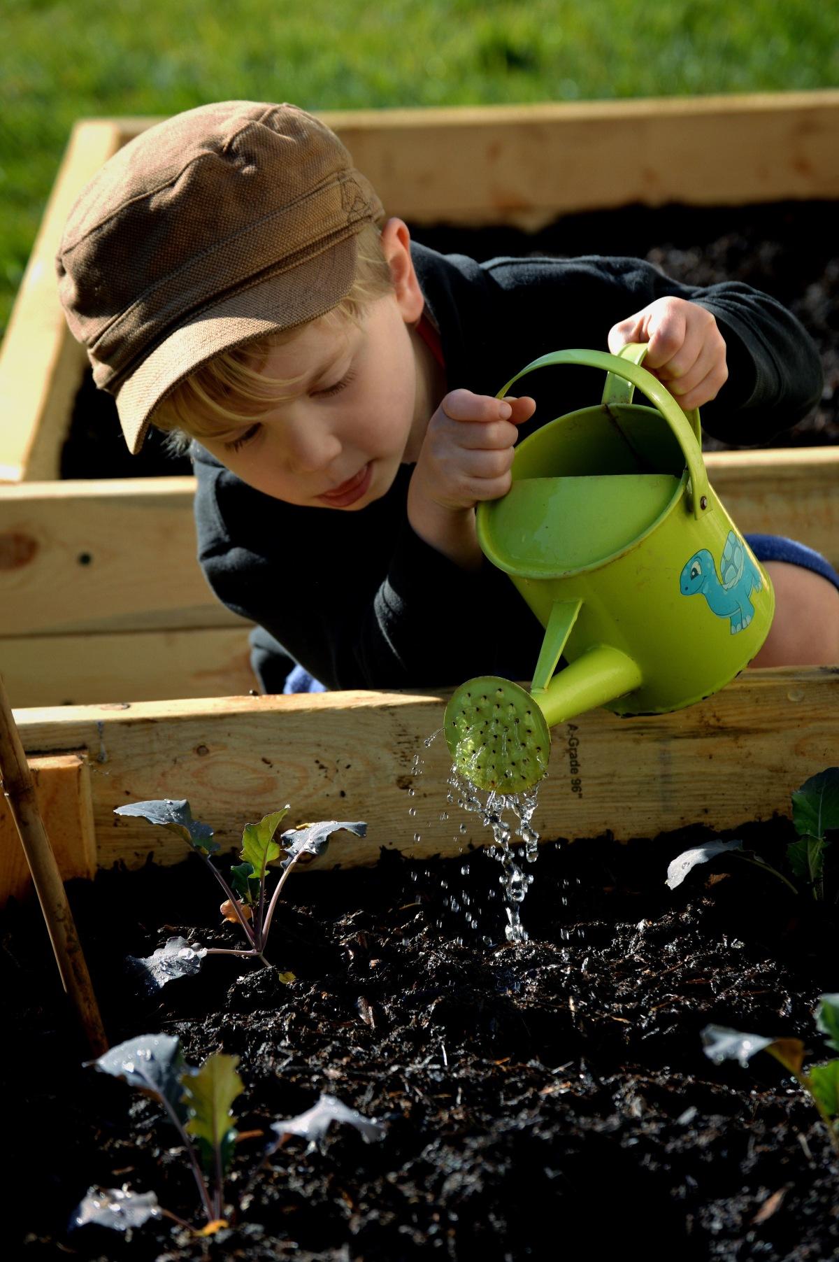 Montessori 3-6 Botany in the Home