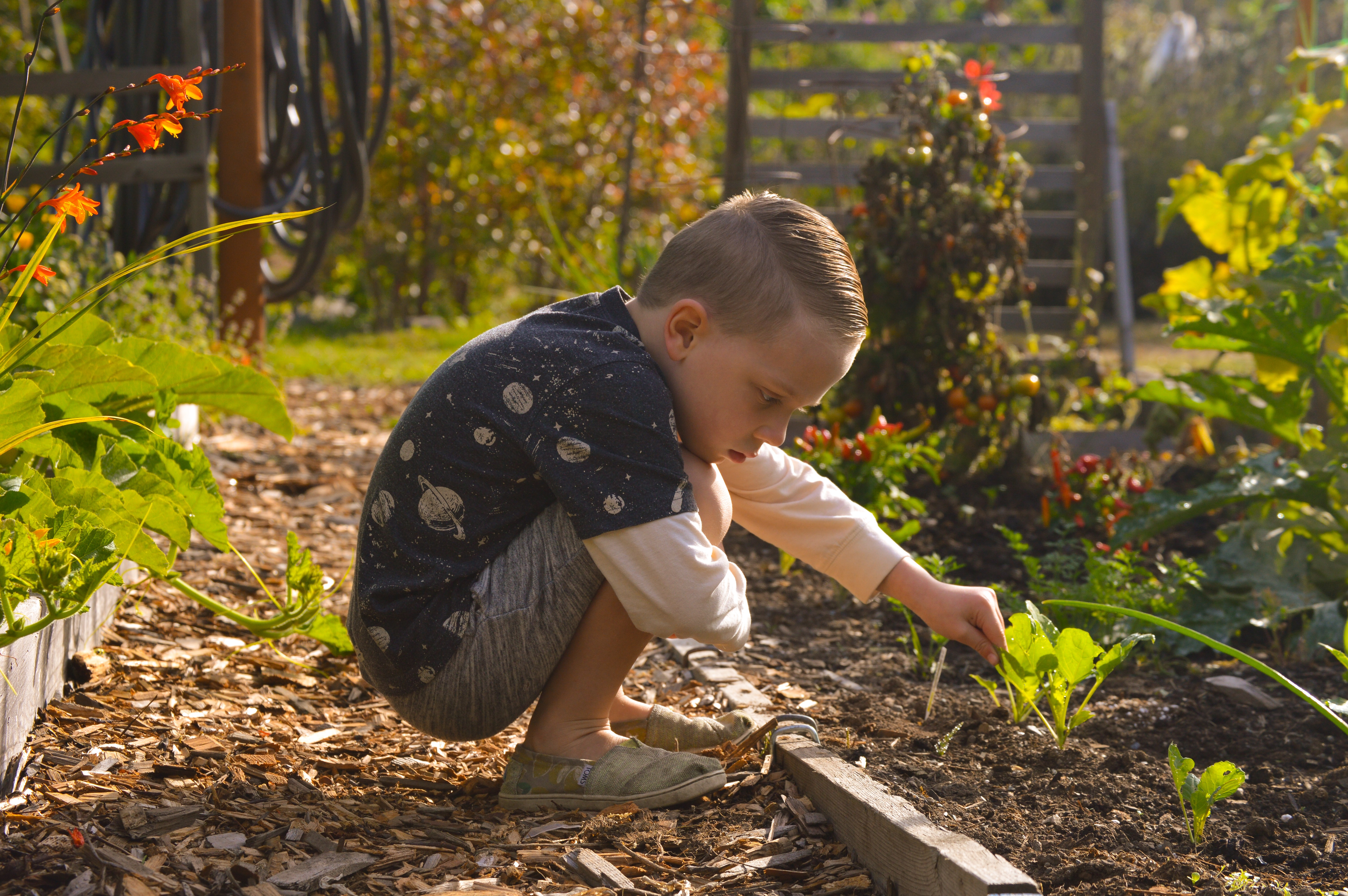gardening with kids – Our Montessori Life